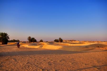 charro: Jinete galopando para cumplir con la puesta de sol en el desierto Foto de archivo
