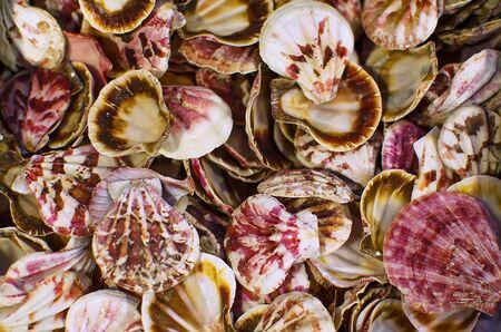 relievo: Colorful, empty seashells scattered randomly on the beach