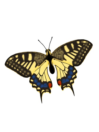 Illustration of a butterfly on a white background.
