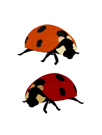 Illustration of a ladybug on a white.