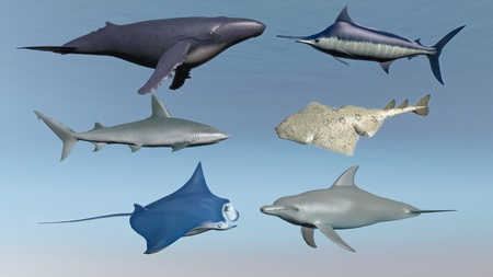 blue whale: Illustration of six fish of marine life