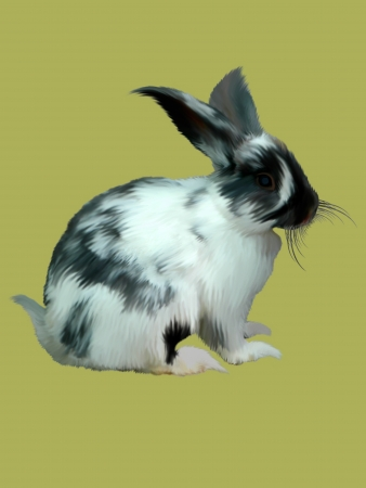 Rabbit isolated on a color background. Stock Photo