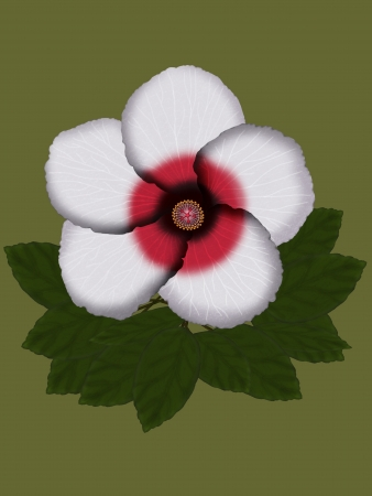 Beautiful Hibiscus Flower isolated on a color background.  Stock Photo