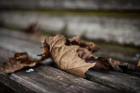 dead leaves: Hojas muertas en un banco Foto de archivo