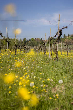 over grown: Spring explodes in the vineyards