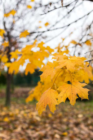 over grown: The last leaves herald the arrival of winter inexorable.
