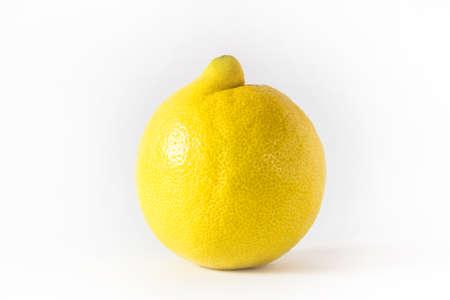 citrus aurantium: Close up of a single lemon on a white background.