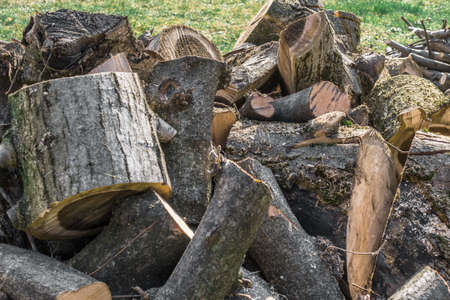 trees services: Trunk of tree torn to pieces with an ax.