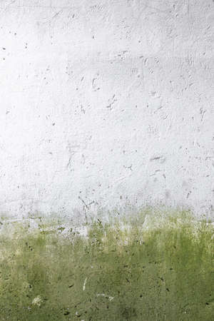 attacked: Front view of a wall Attacked by moss and mold. Stock Photo