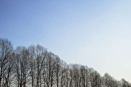 progression: A row of trees in progression, from highest to lowest. Stock Photo