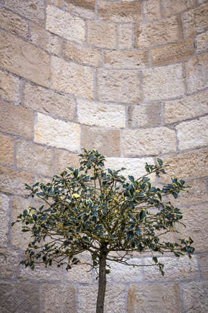 positioned: A holly positioned outside a church, as a decoration.
