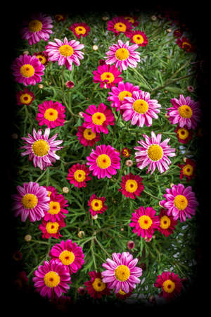 An amazing bunch of spring flowers in bright colors made. Stock Photo