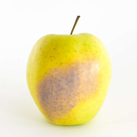 bad apple: A bad apple isolated on a white background.