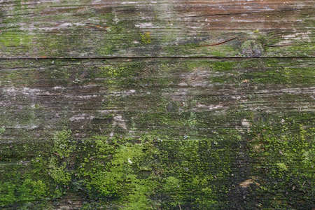 affect: Moss and mold affect a wood panel.