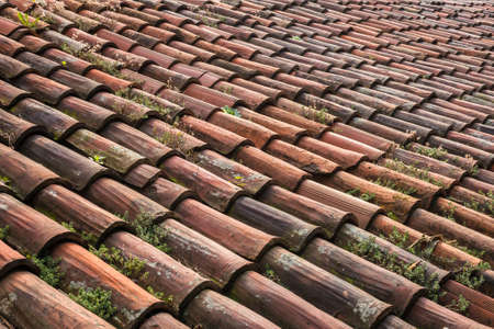 natural vegetation: A roof made up of tiles old and worn, with natural vegetation, which needs restructuring.