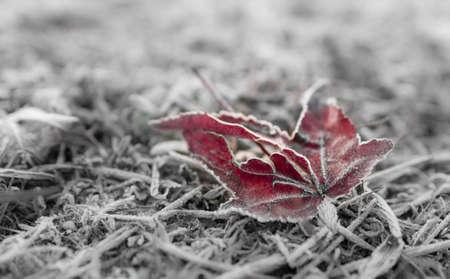 dode bladeren: Abstracte textuur van dood blad, bedekt met ijs in de winter dag. Zachte selectieve aandacht. Perfecte achtergrond of textuur. Cool bokeh.