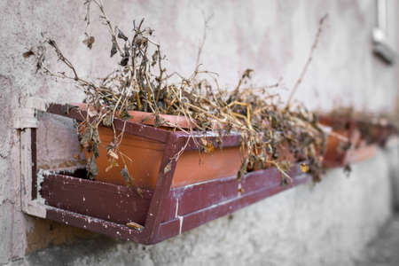 Dead and dry plants in pots on the wall.