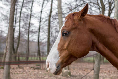 head profile: Portrait of the beautiful brown horse from profile Stock Photo