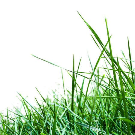 bush trimming: Tall grass against a white background. Stock Photo