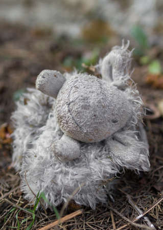 disturbing: Close-up of lonely abandoned teddy bear toy in the forest.