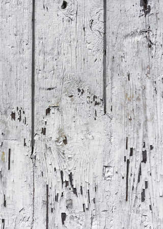 severely: Wooden wall with white paint is severely weathered and peeling
