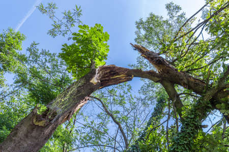 storm damage: Storm damage. Broken tree in the forest. Stock Photo