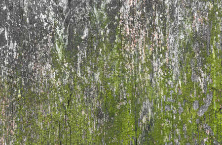 Old cracked decay wood background covered in green moss and mold Stock Photo