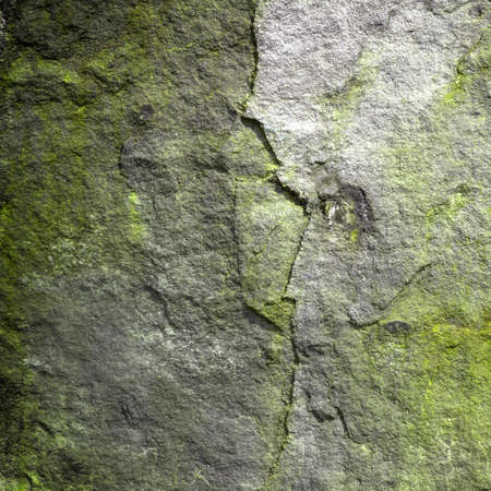 Side view of alien skull in rock background (abstract symbol idea). Stock Photo