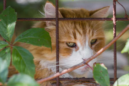 Cat lying in cages with sad expression. Extreme close-up. Defocused blurry background.