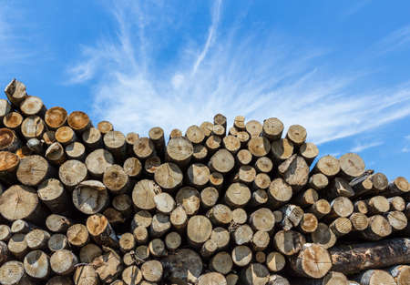 Stack of cut timber logs against clear blue sky. Closeup of wooden trunks. Stock Photo