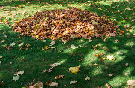 Fallen leaves are collected in pile Stock Photo
