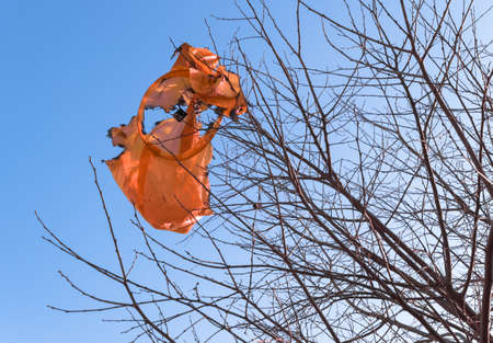 Remains of a burned flying lantern, entangled in the branches of a tree. The hidden dangers of those magical sky lantern festivals.