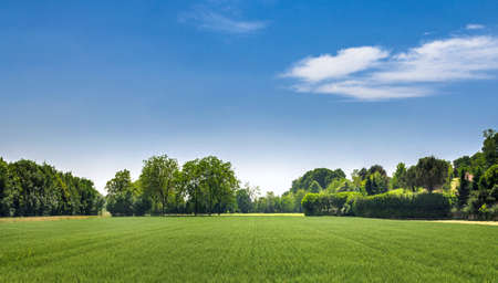 Countryside landscape. Italy. Beautiful typical countryside summer landscape. Banque d'images