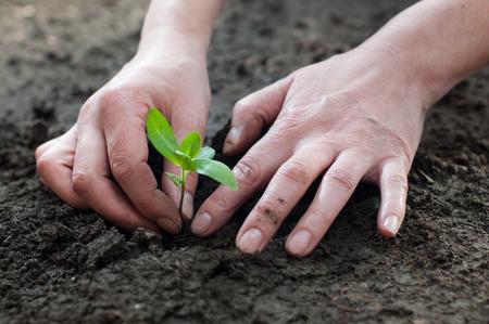 Planting of plants in the soil in spring Foto de archivo