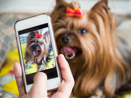A womans hand holds a smartphone and takes a picture of a little dog Reklamní fotografie
