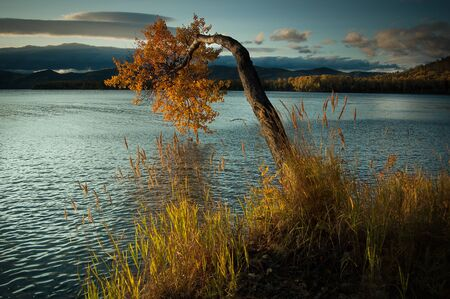 Lake Baikal in the fall. The tree bent over the water