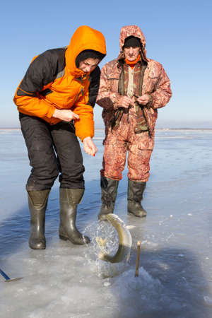 ice fishing: Woman pulls a fish out of the hole in the ice fishing.