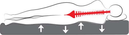 columna vertebral: Plano esquemático de la cama ortopédica o colchón de vectores