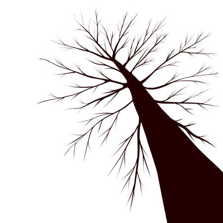 linden: tree silhouette