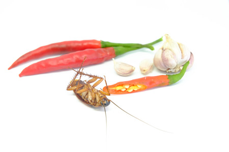A garlic and chili can chase cockroaches,Close up cockroach chili and garlic on isolated style. Stok Fotoğraf