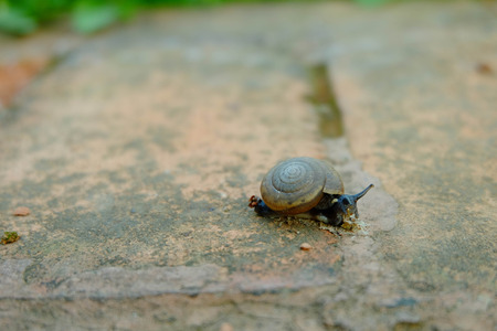 Little snail crawling on the brick floor.