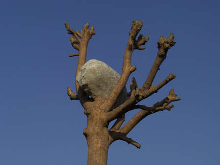 Stone on the top of a tree over a blue sky