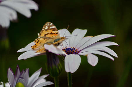 margarite: Monarch Butterfly and Wild flowers Stock Photo