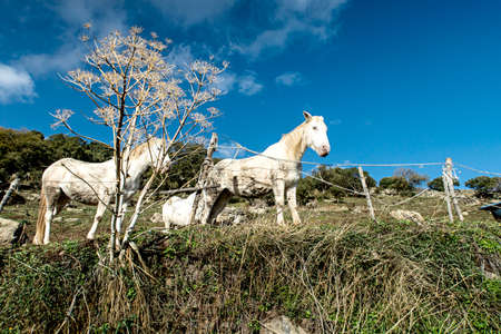 Horses grazing - Sardinia Standard-Bild