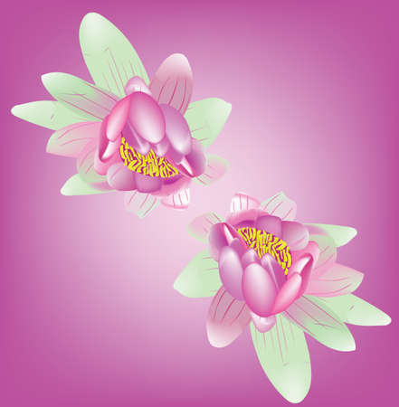 The two fine bright lily dismissed on a pink background Vector