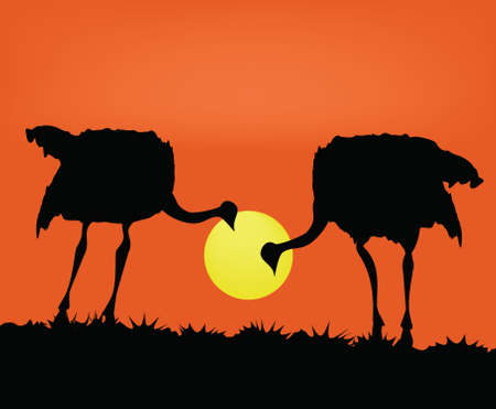 warmly: Two ostriches against the coming sun