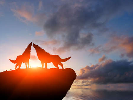 gray wolf: two wolves on a mountain top Stock Photo