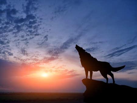 cima montagna: wolve sulla cima di una montagna Archivio Fotografico