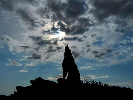 lobo: wolve en la cima de una montaña