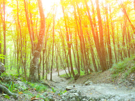 whose: mountain forest, through whose branches the sun shines brightly